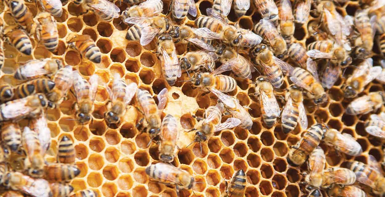 Healthy Hives, Healthy Lives
