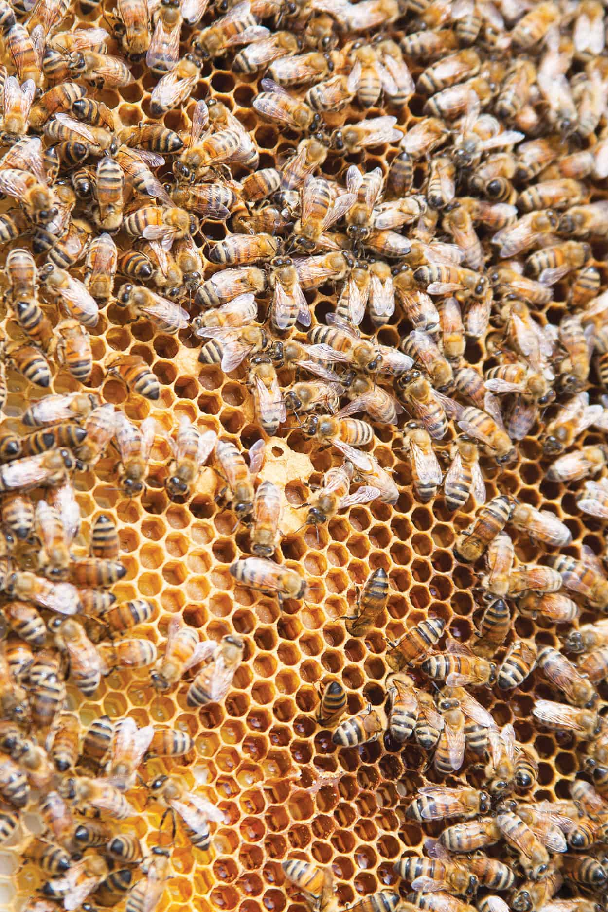 healthy hives healthy lives edible santa fe albuquerque taos