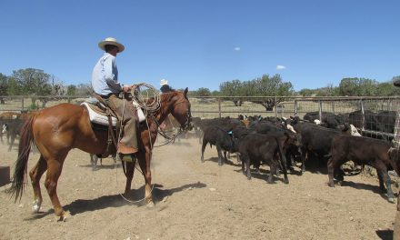 Quivira Coalition's Twenty Years of Radical Ranching