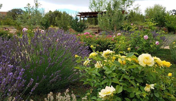 Garden Conversations | Edible Santa Fe, Albuquerque, Taos