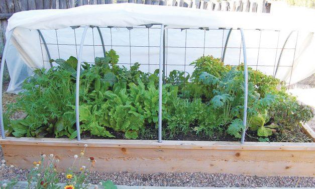 Fail-Safe Gardening