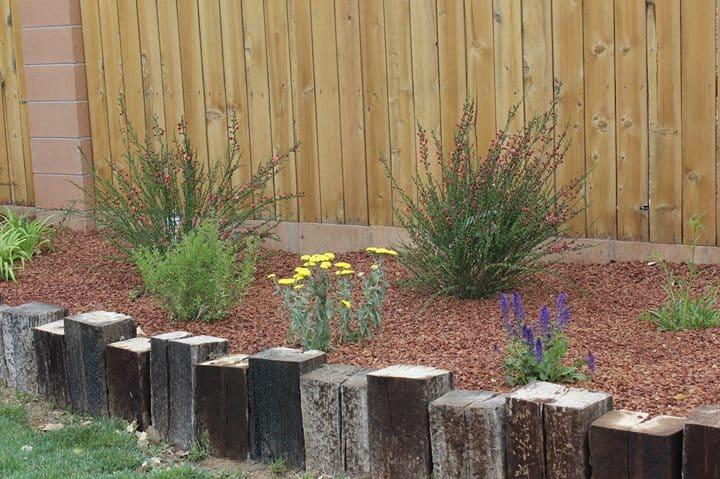 Osuna University Principles Of Landscape Design Edible New Mexico