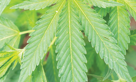 What could Industrial Hemp mean for New Mexico Agriculture?