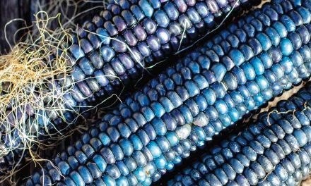 A Future for Blue Corn