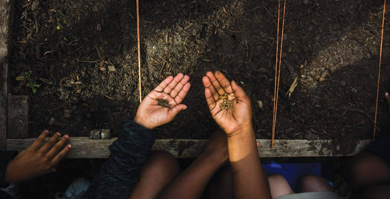 Planting Seeds for Community Needs